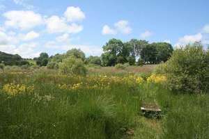 Banceithin_grassland