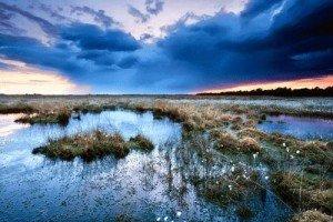 Project Maya - peatlands sunset