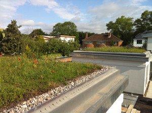 Wildlflower Green Roof on Garage
